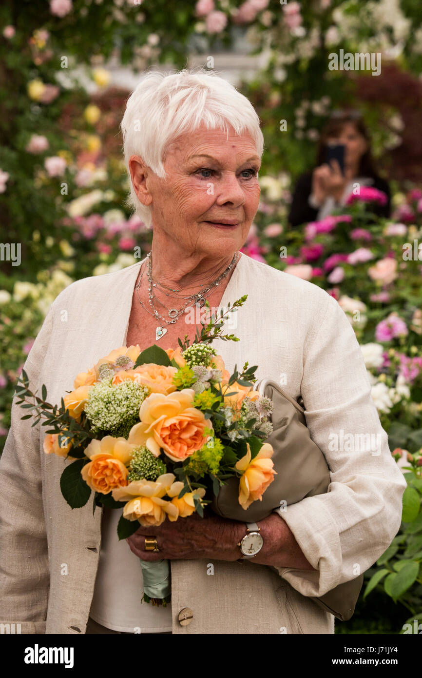Dame Judi Dench with the apricot rose ...