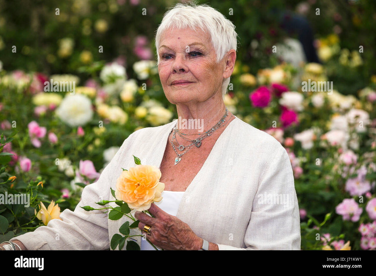 Chelsea London, UK. 22nd May, 2017. RHS Chelsea Flower Show. Dame Judy Dench poses with a rose which has been named Stock Photo