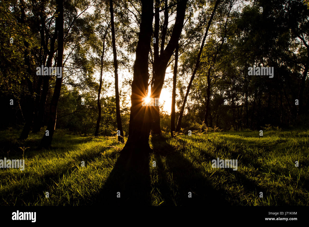 Cannock Chase, Staffordshire, UK. 22nd May, 2017. UK Weather: The sun sets over Cannock Chase Forest, Staffordshire, - Stock Image