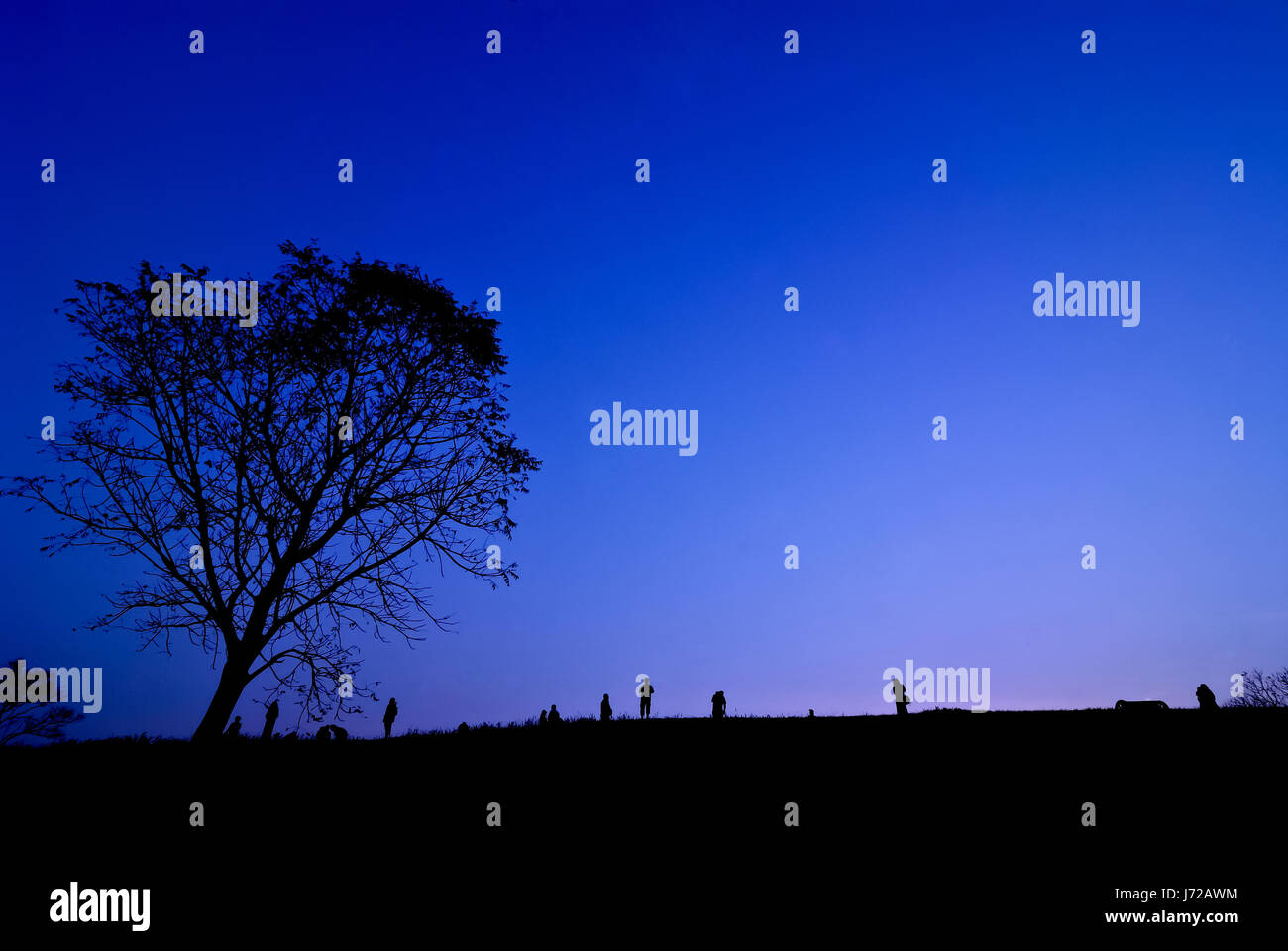 Silhouette of young photographer taking picture near tree of landscape during the sunset Stock Photo
