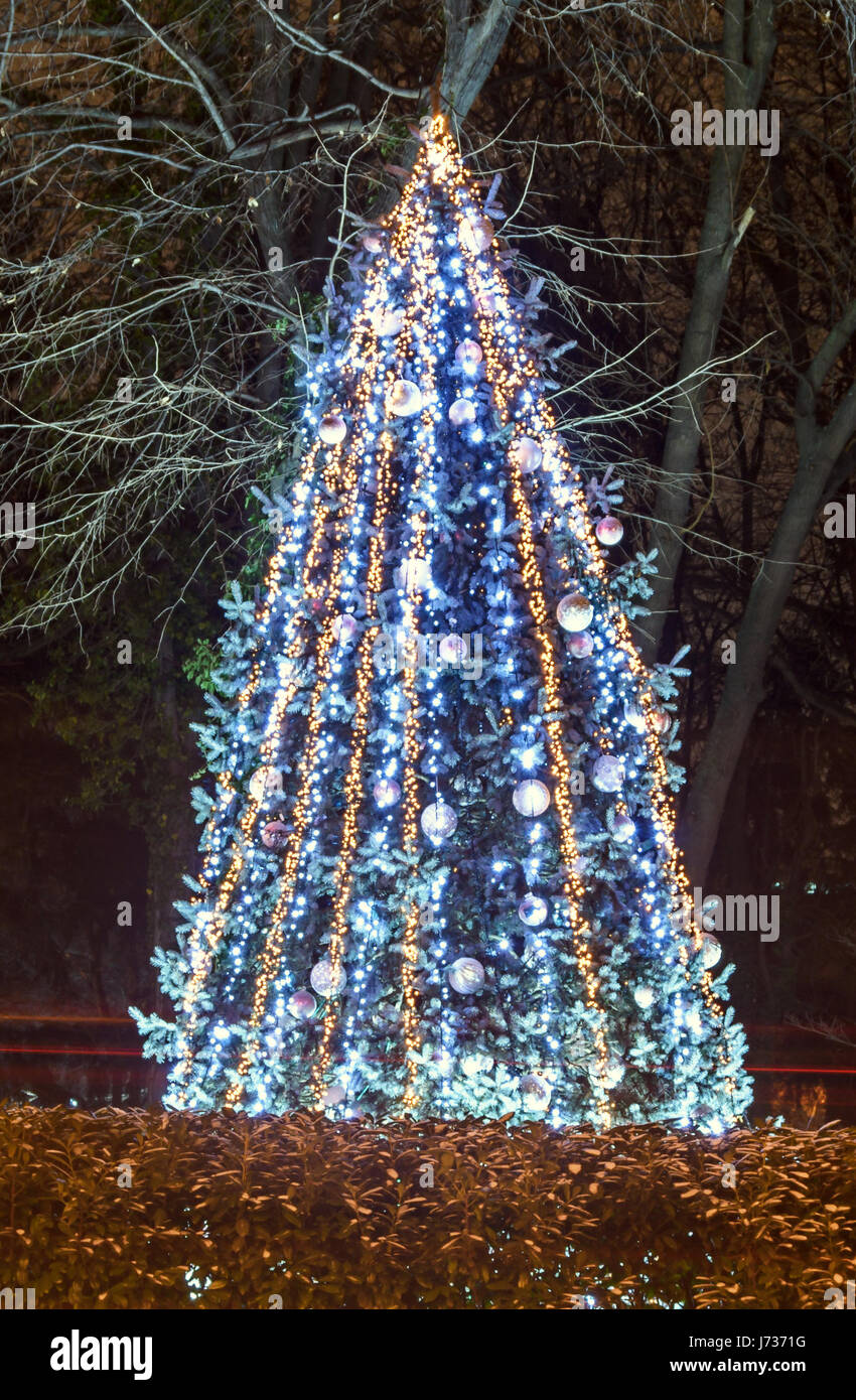 Colored Lighted Christmas Tree With Blue Ornaments Outdoor Night Time