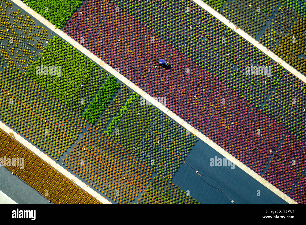 Horticulture, colorful potted plants, gardener at work, horticulture, graphic structures, colorful lines, agriculture, - Stock Image