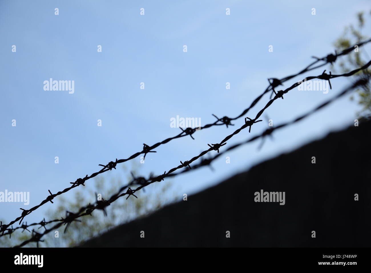 Barbed wire fence against blue sky - Stock Image