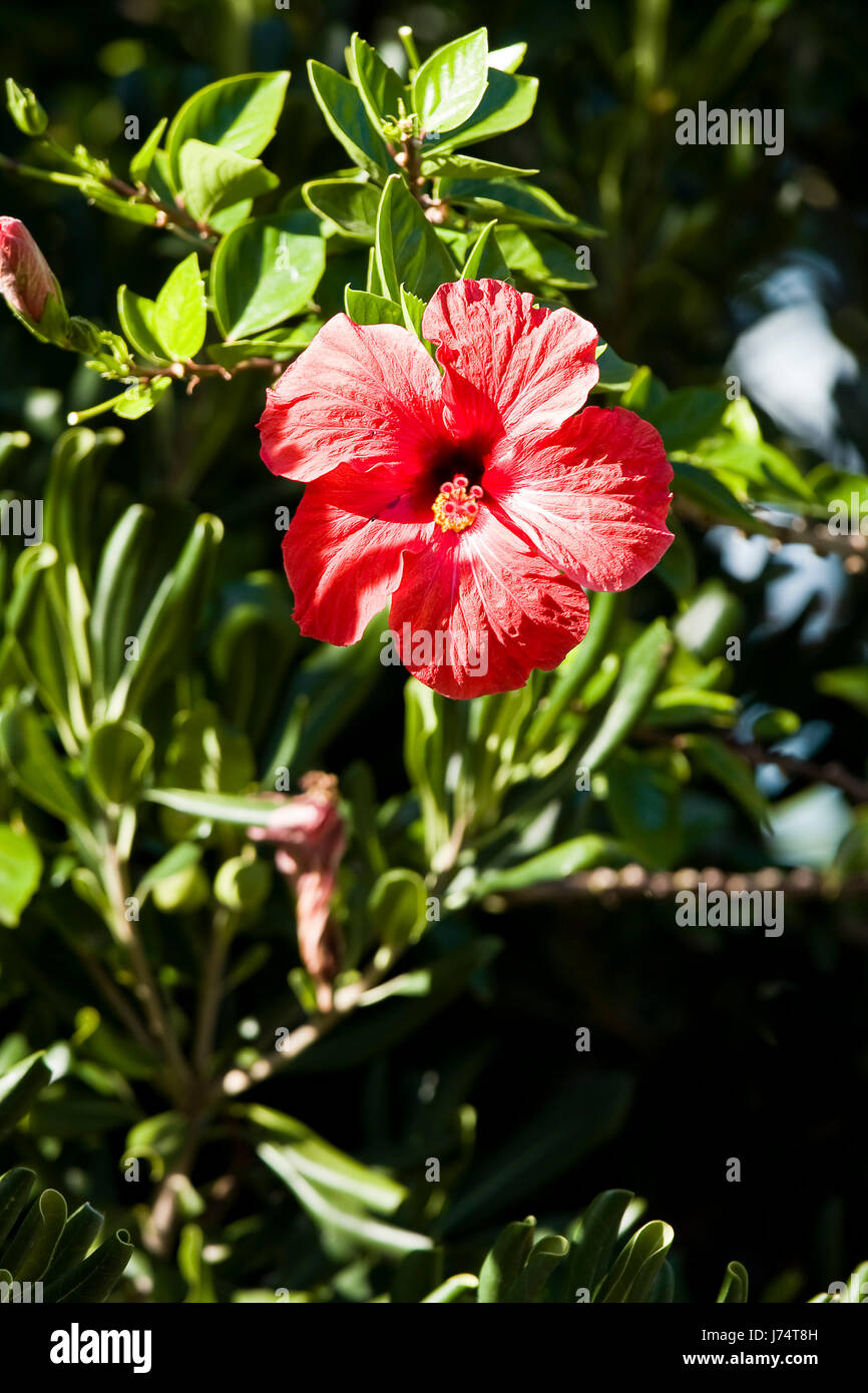 Flower Plant Mother Day Gift Decoration Hibiscus Leaf Macro Close Up