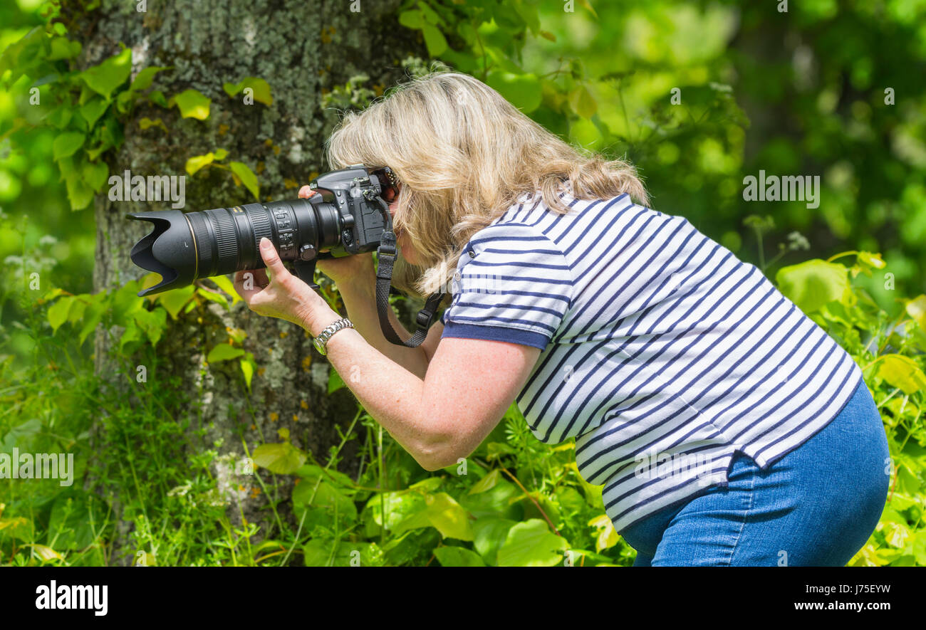 Female photographer using a long lens and camera in Summer in the UK countryside. - Stock Image