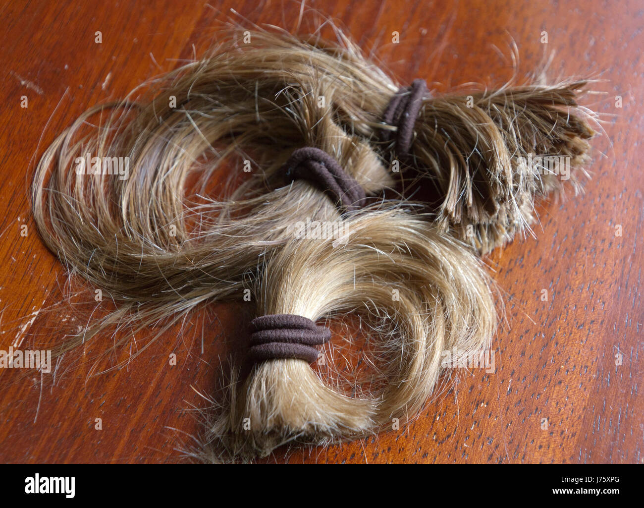 Close up of a thick, cut-off ponytail of long blond hair held