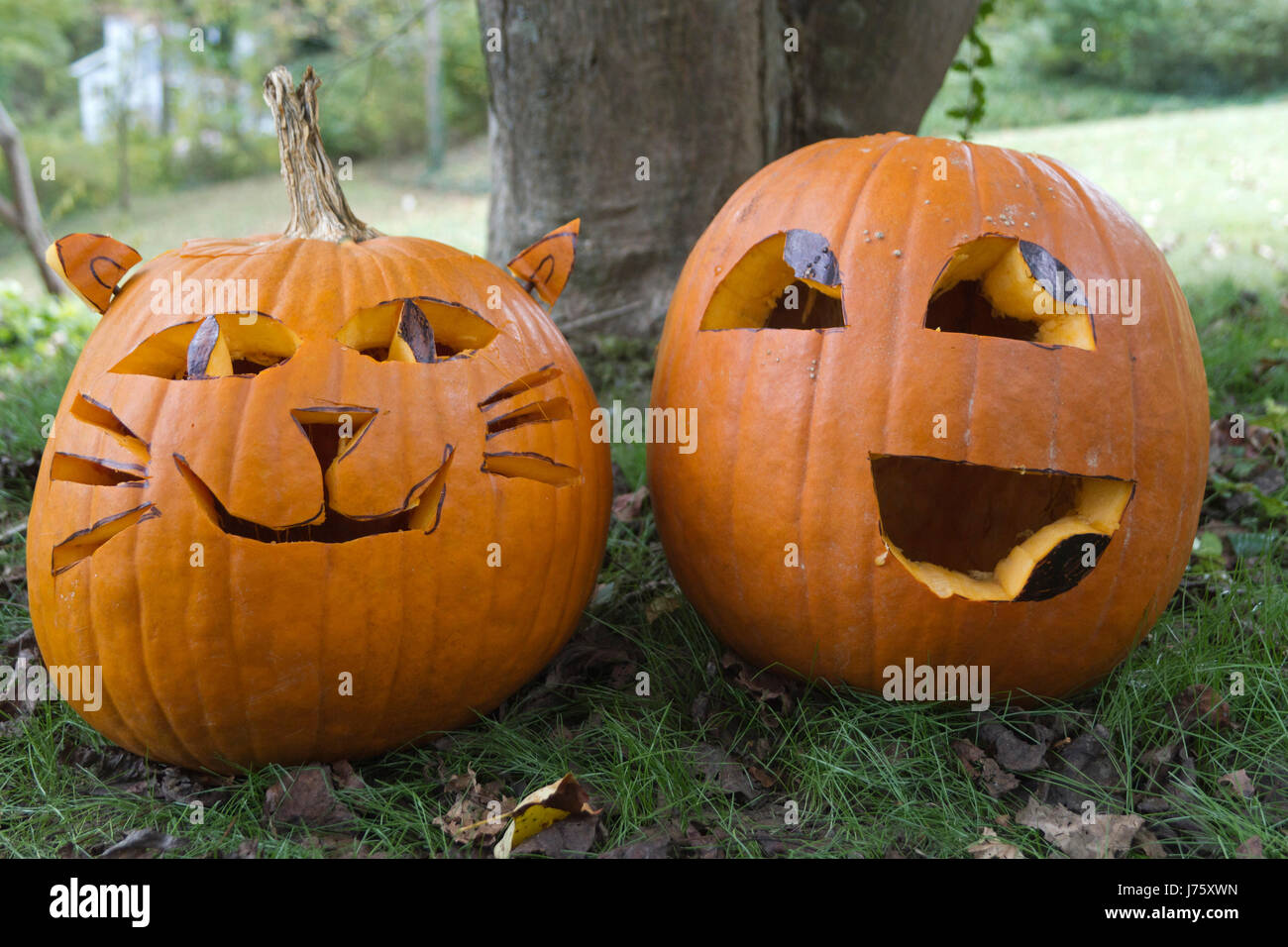 Two colorfully personable Halloween Jack-o-lanterns with happy looking faces sit side by side in the autumn, leaf - Stock Image
