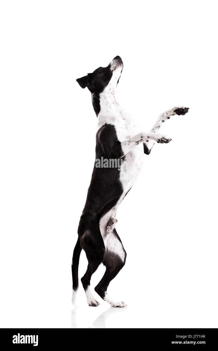 animal pet dog puppy canine obedient friend beautiful beauteously nice game - Stock Image