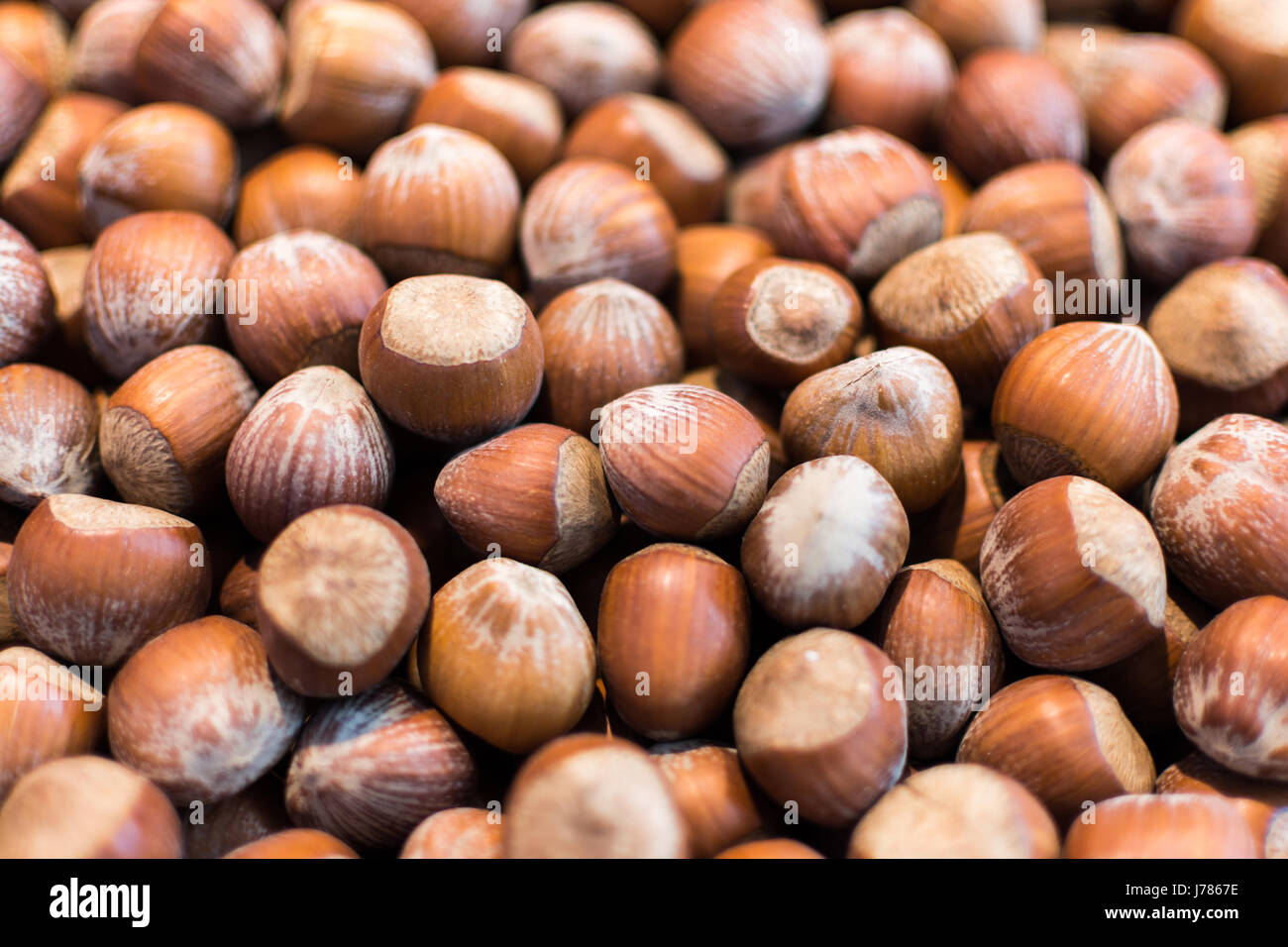 Organic Hazelnut Background. Stack of Raw Hazelnuts Close Up. - Stock Image