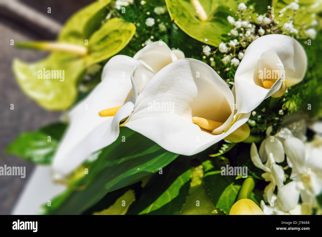 Flower arrangement with white arums and green anthuriums in a close up view on the spadix and spathe of the flower - Stock Image