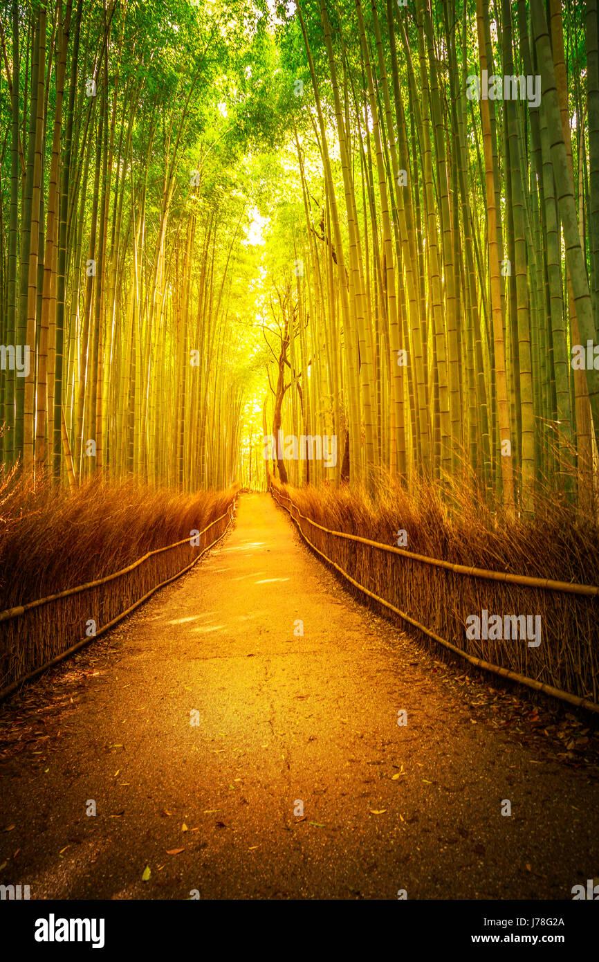 Arashiyama bamboo Kyoto - Stock Image