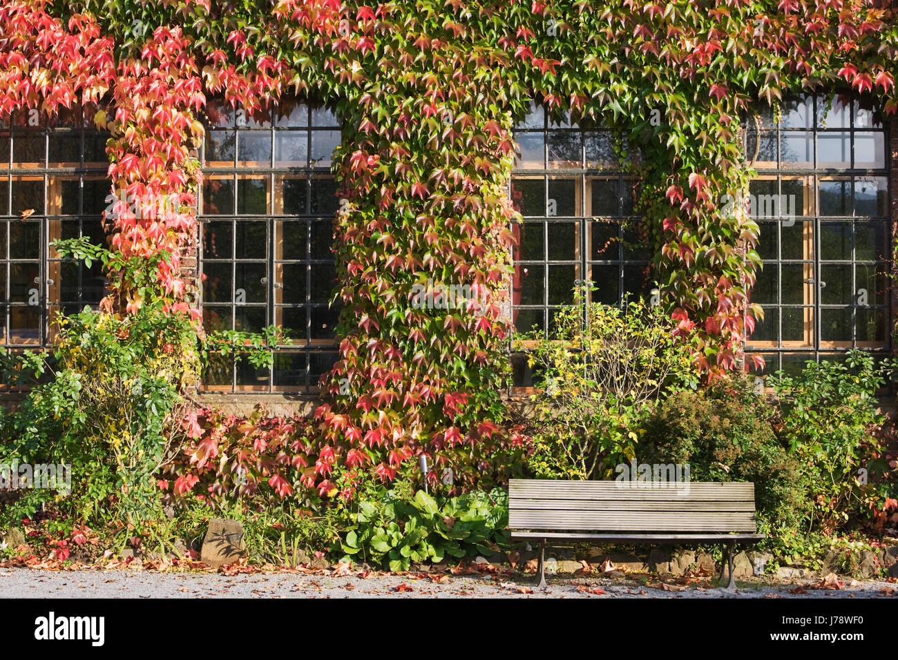 house building window porthole dormer window pane sunlight fiercer vine grape Stock Photo
