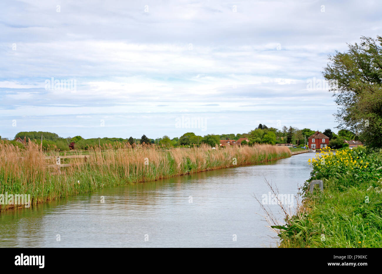 A view of Somerton Dike leading to West Somerton Staithe on the Norfolk Broads, England, United Kingdom. - Stock Image