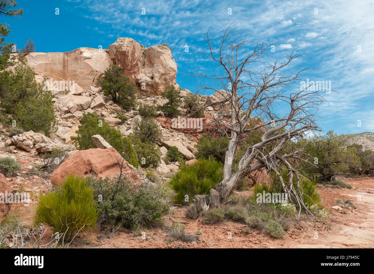 Sand Canyon Trail, Canyons of the Ancients National Monument northwest of Cortez, Colorado. - Stock Image