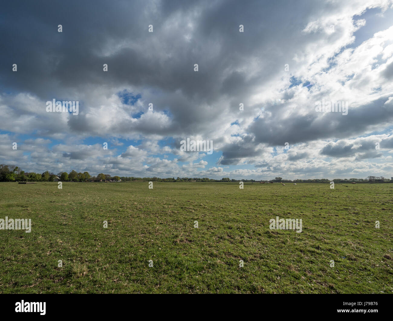 green meadow and blue sky with big clouds, Wisseler Duenen, Kalkar, Germany - Stock Image