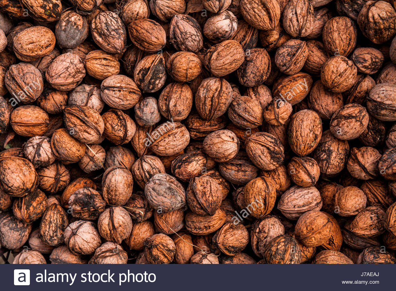 Background of walnuts. Many nuts - Stock Image