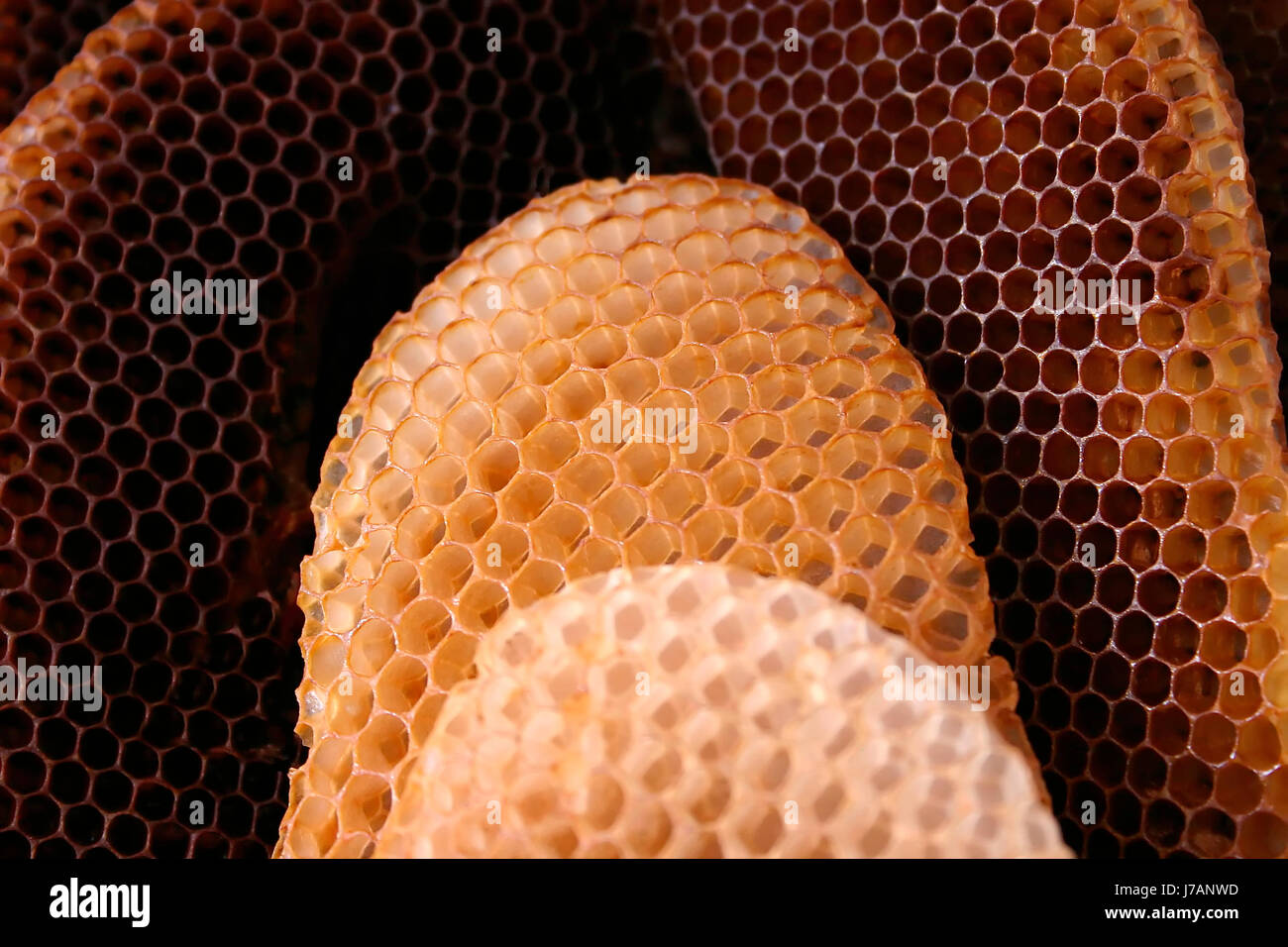 insect cell comb pattern honeycomb structure combing bee macro Stock