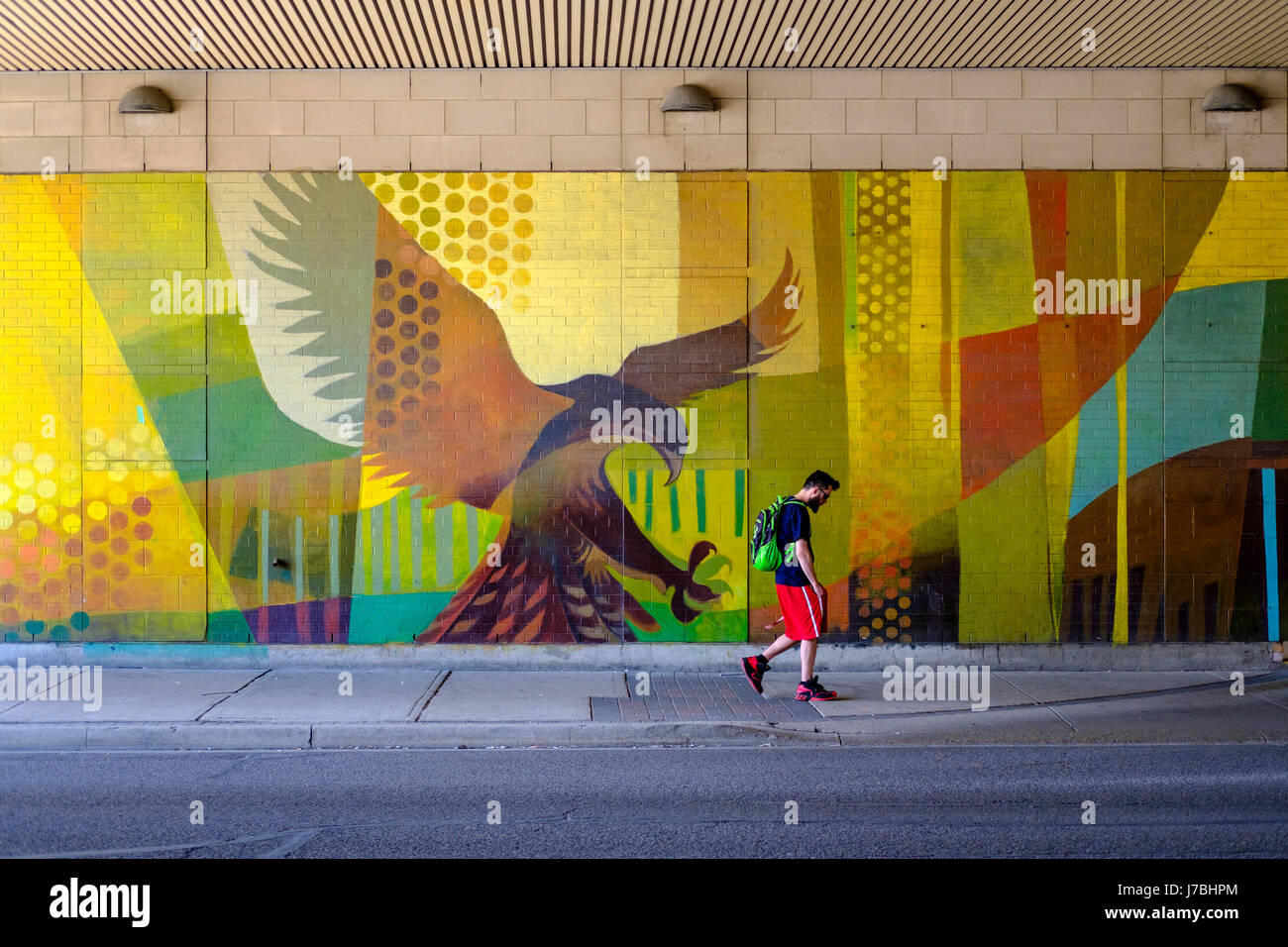 Wall graffiti art, eagle about to grab a male pedestrian walking on the sidewalk, predator and prey, danger, student - Stock Image