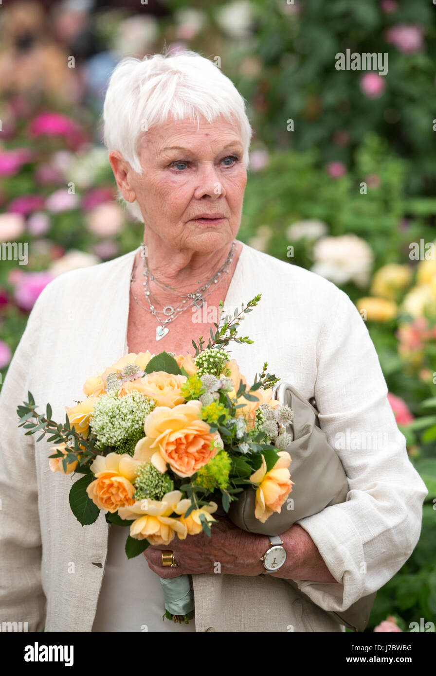 Actress Dame Judi Dench at the RHS Chelsea Flower Show 2017 Stock Photo