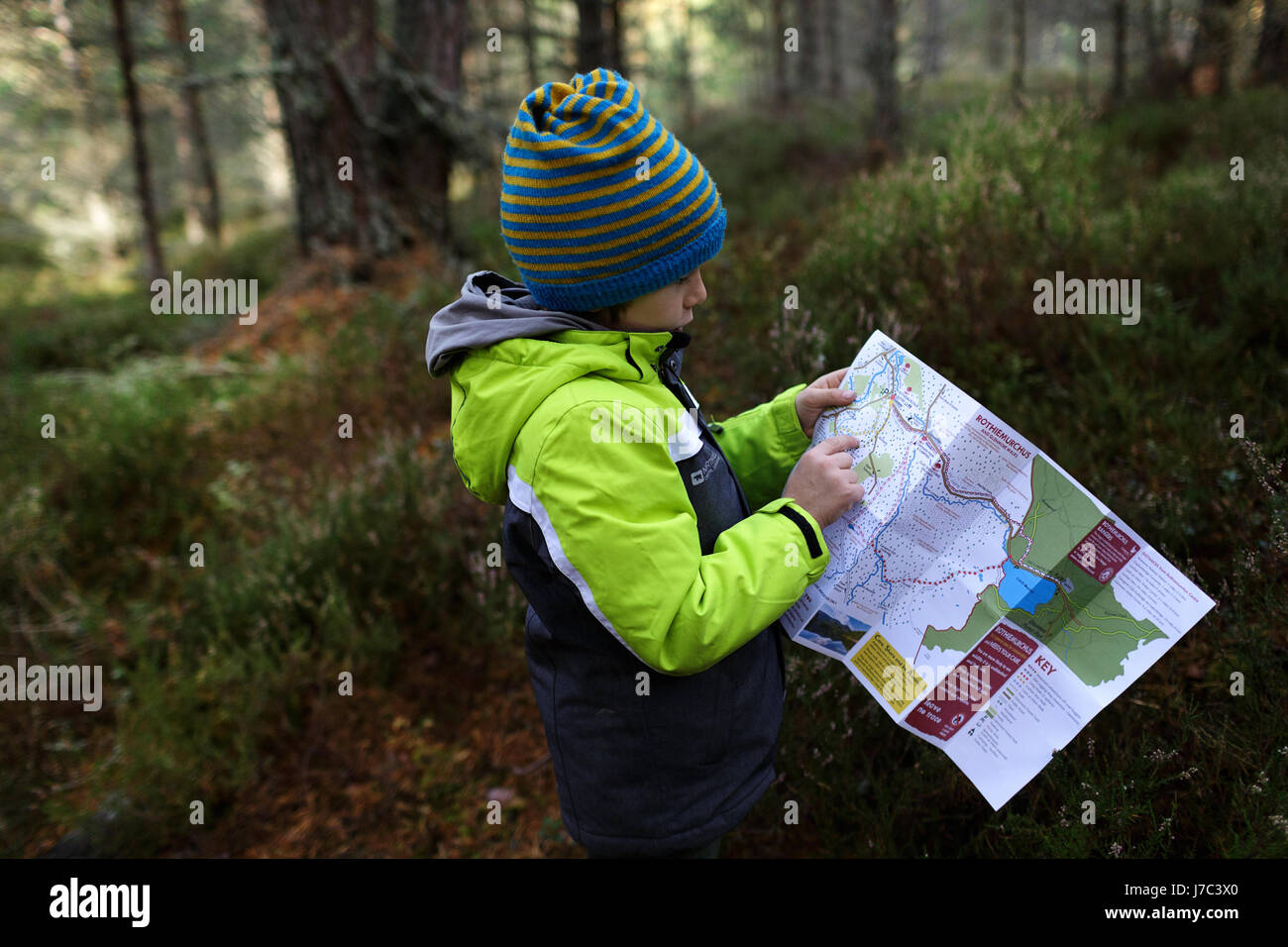 Boy reading a map in the forest, Cairngorms, Scotland, UK. - Stock Image