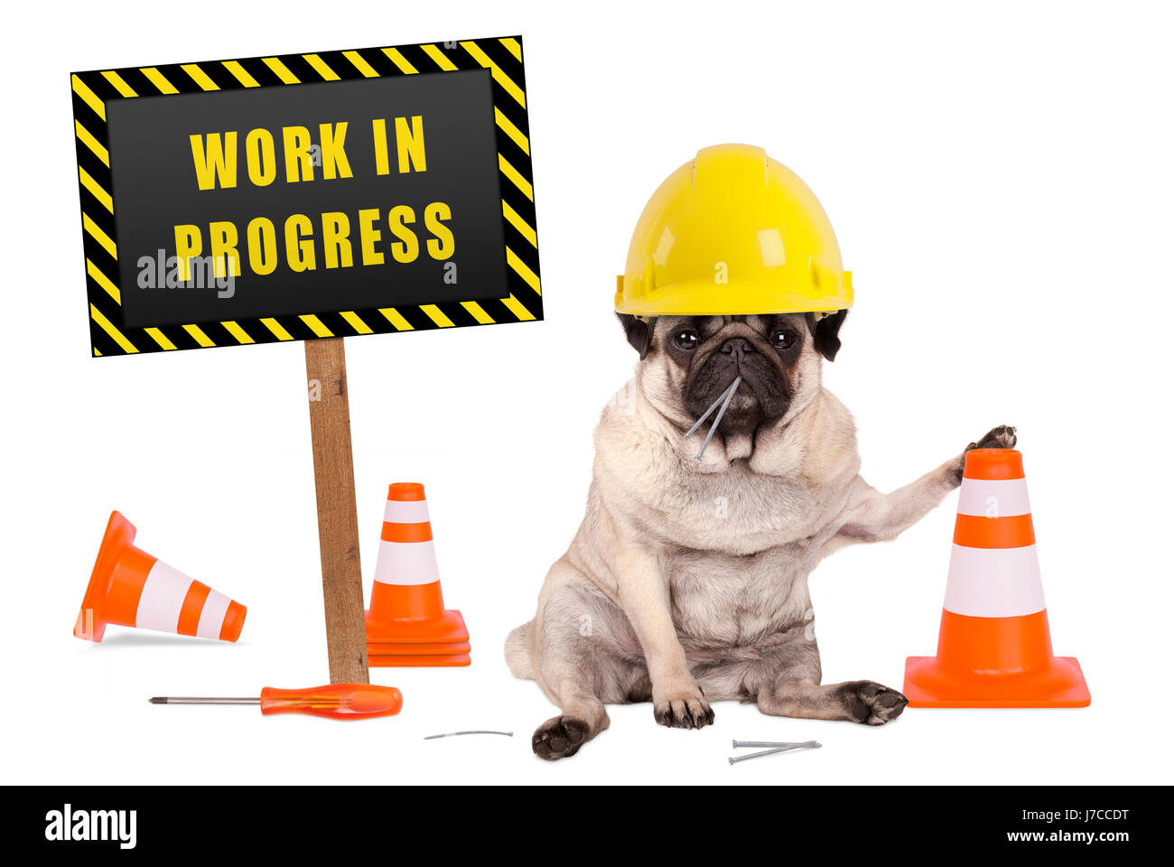 pug dog with constructor safety helmet and yellow and black work in progress sign on wooden pole, isolated on white Stock Photo
