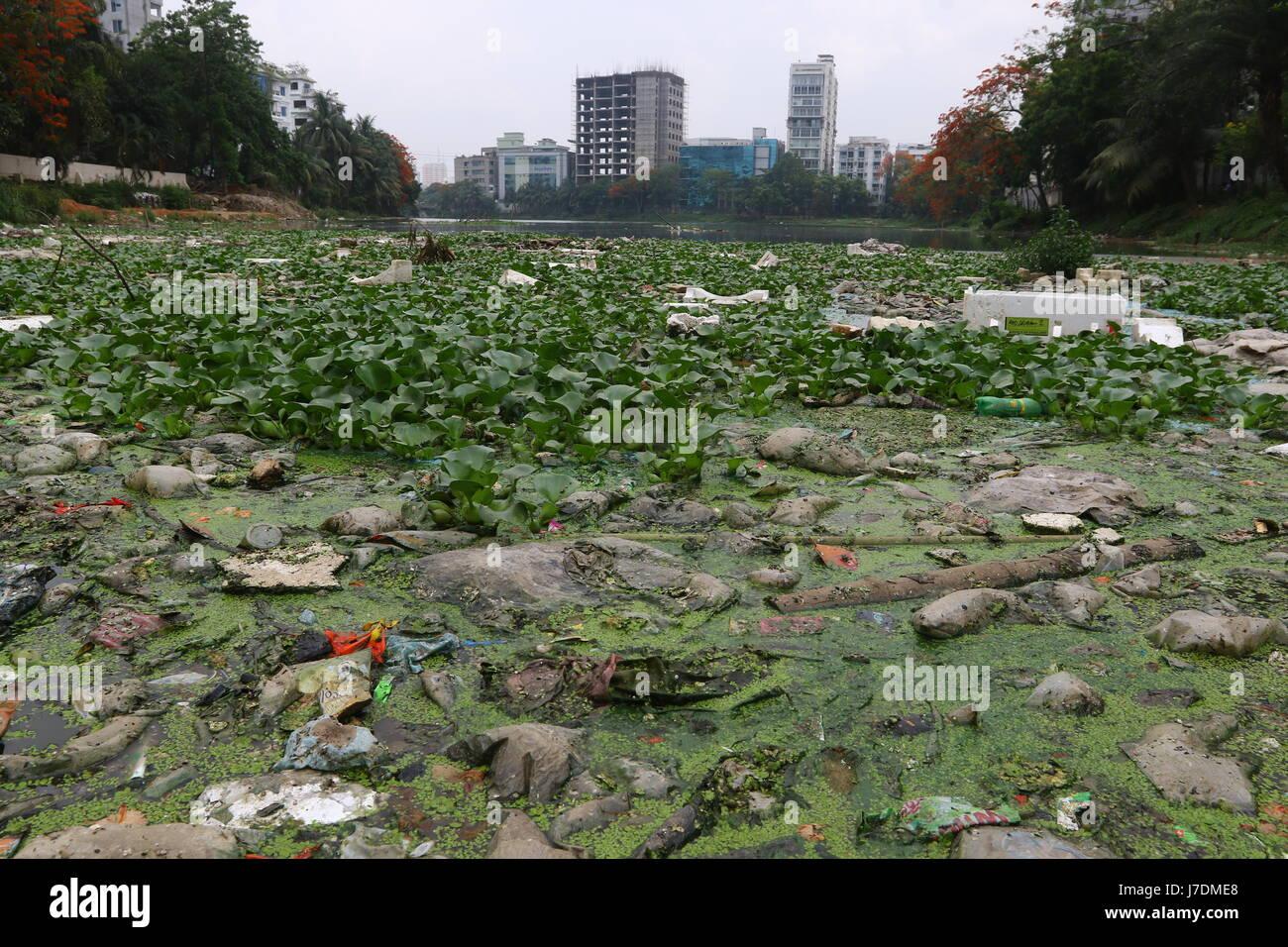 Dhaka 20 may 2017. Dhaka gulshan lake pollution shows water contamination in Gulshan Lake is getting worse as hazardous - Stock Image