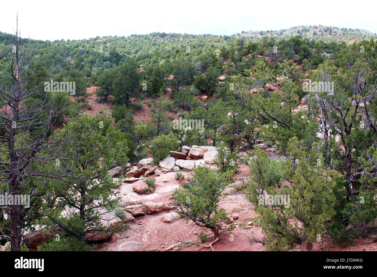 Sweeping landscape view of red rock and pine trees on the Siamese Twins Trail at the Garden of the Gods in Colorado - Stock Image