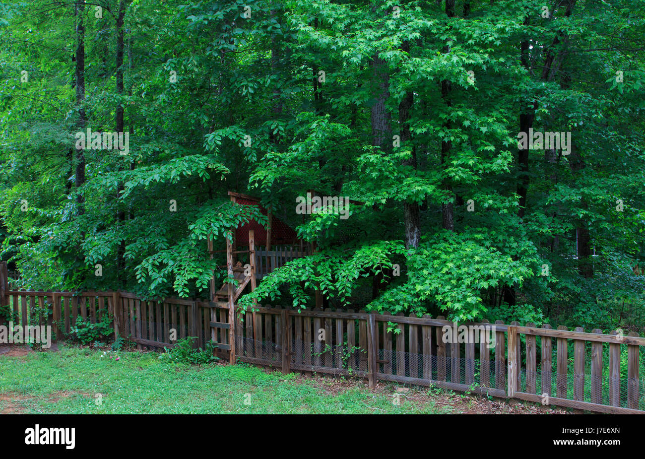 Backyard hidden tree house and picket fence in green trees - Stock Image