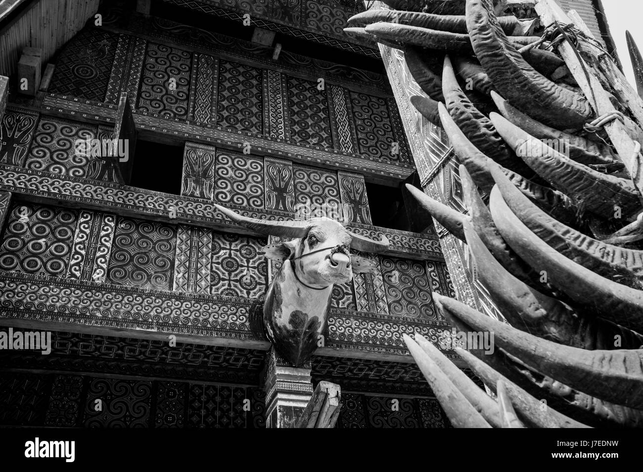 Buffalo Head adorns a Tongkonan house in Toraja with buffalo horns stacked high on a pole at the entrance to this - Stock Image