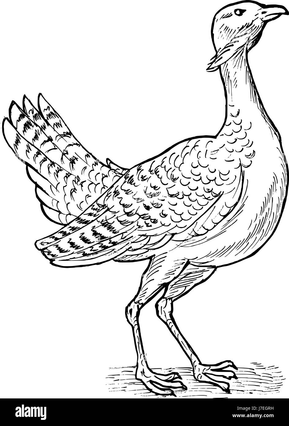 animal bird wild illustration drawing photo picture image copy deduction sketch Stock Photo