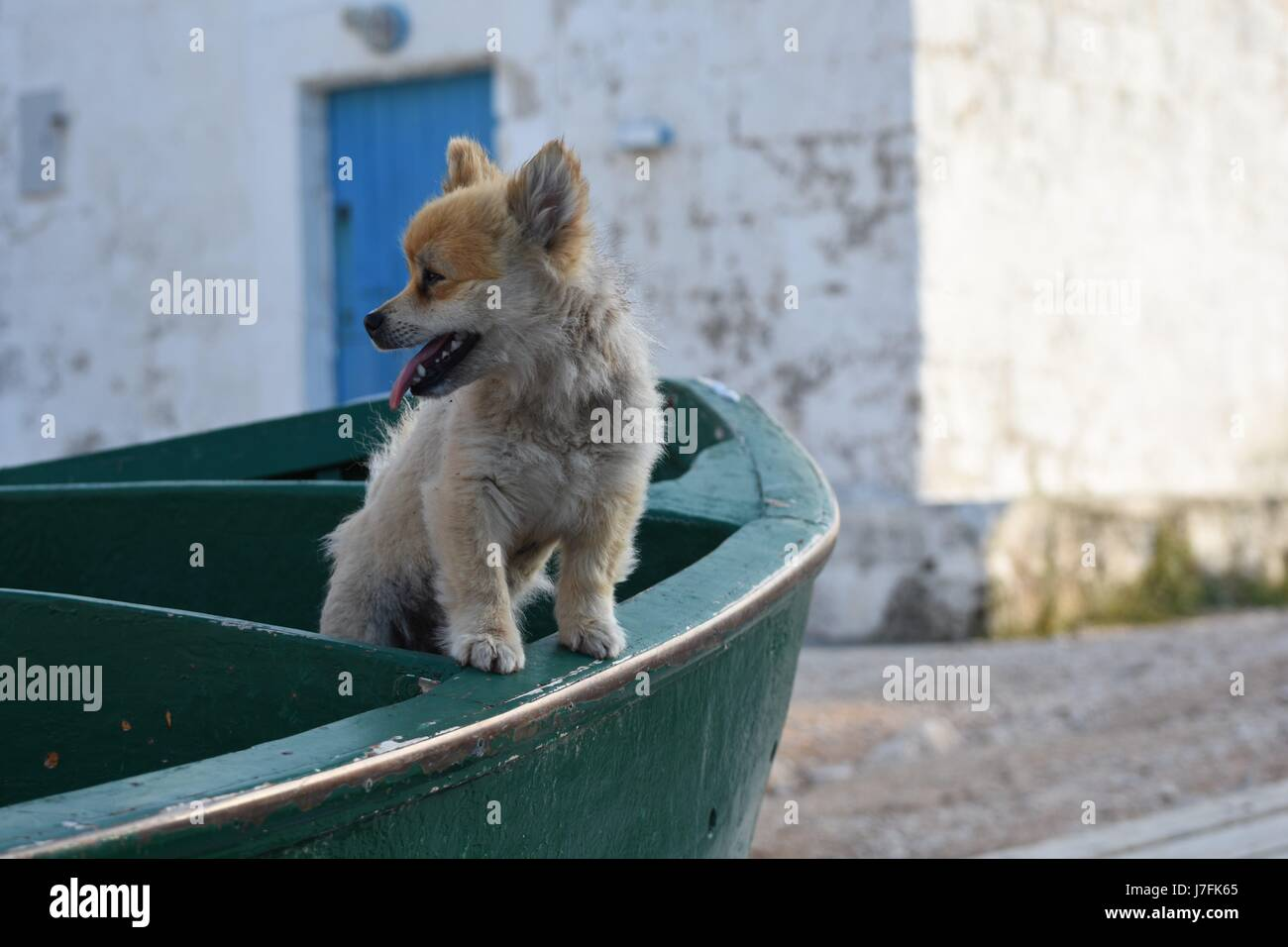 Cute dog standing on a fishermen boat - Stock Image