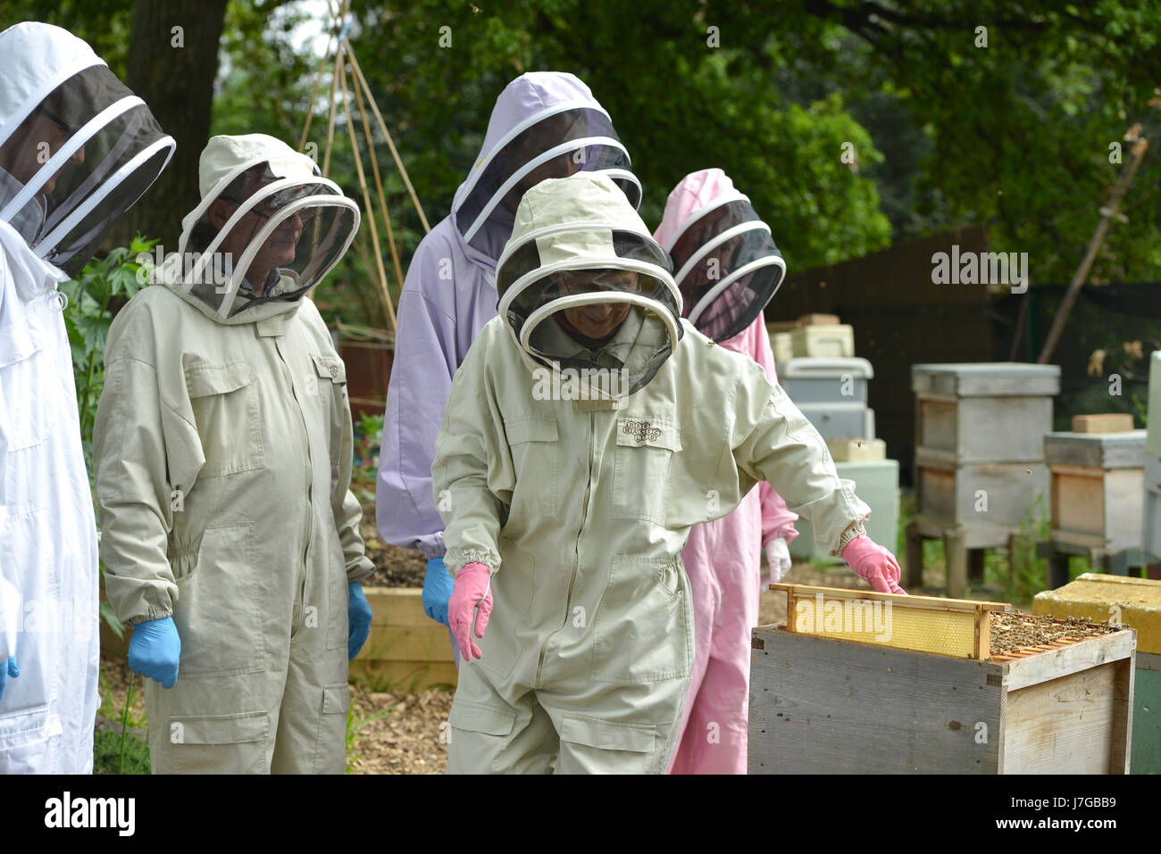 Bee keeping from Bee Urban in London's Kennington Park. - Stock Image