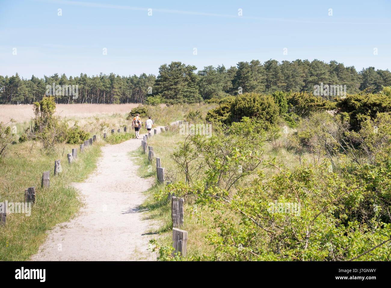 footpath in Darsser Ort at Prerow, Darss, Mecklenburg-Vorpommern, Germany - Stock Image