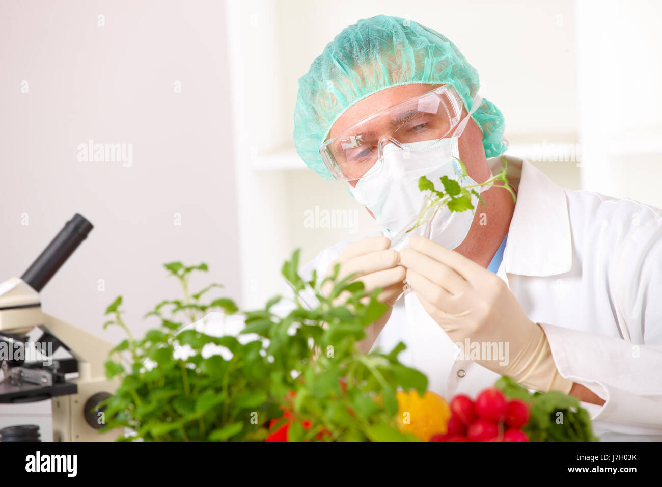 engineering modified genetic plant food aliment men man experimental science Stock Photo