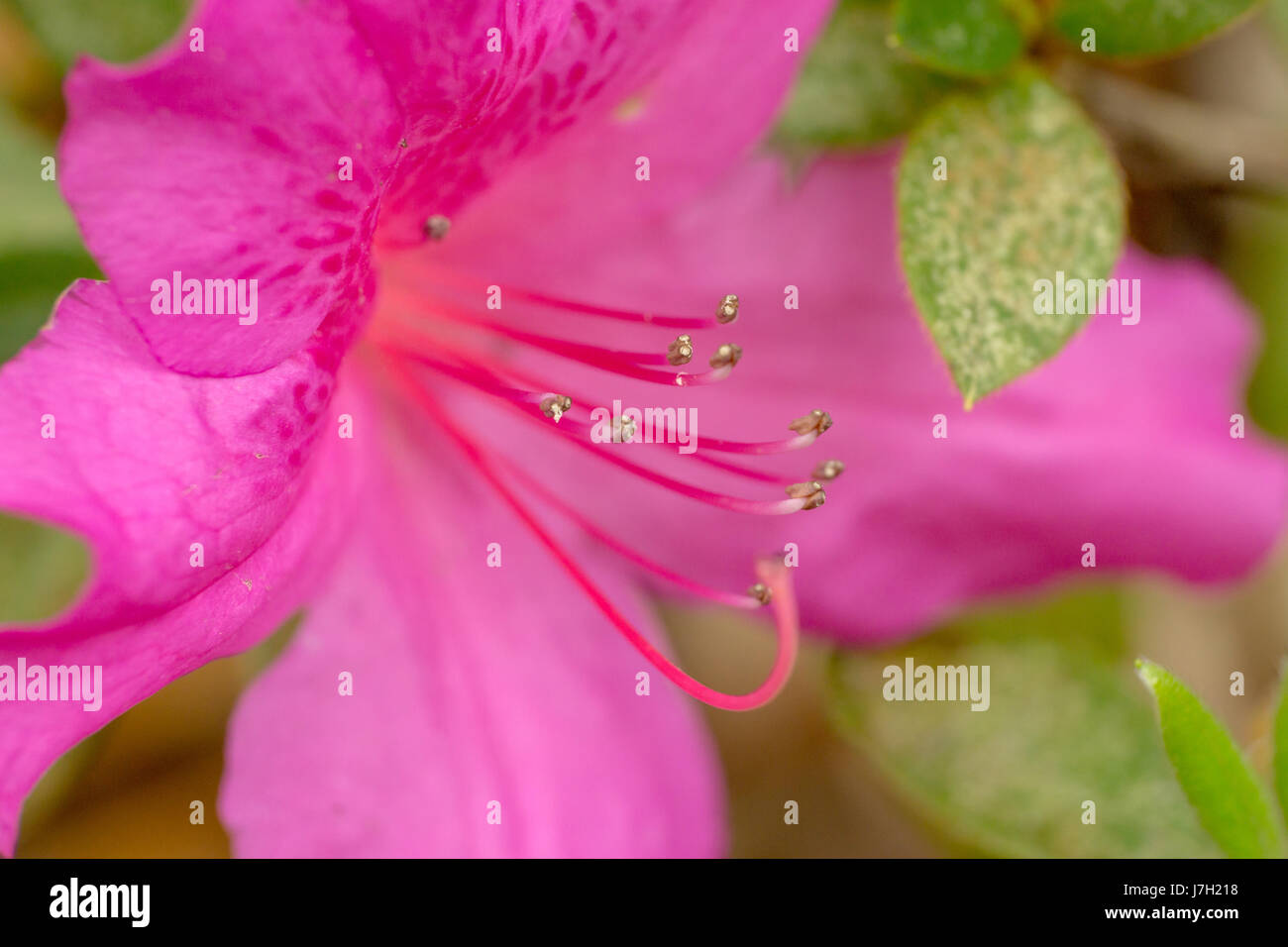 Bright pink flower Stock Photo