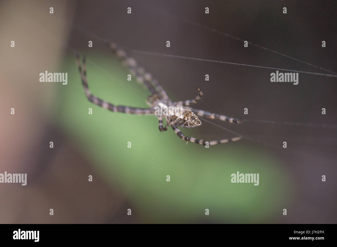 Spider on a web Stock Photo