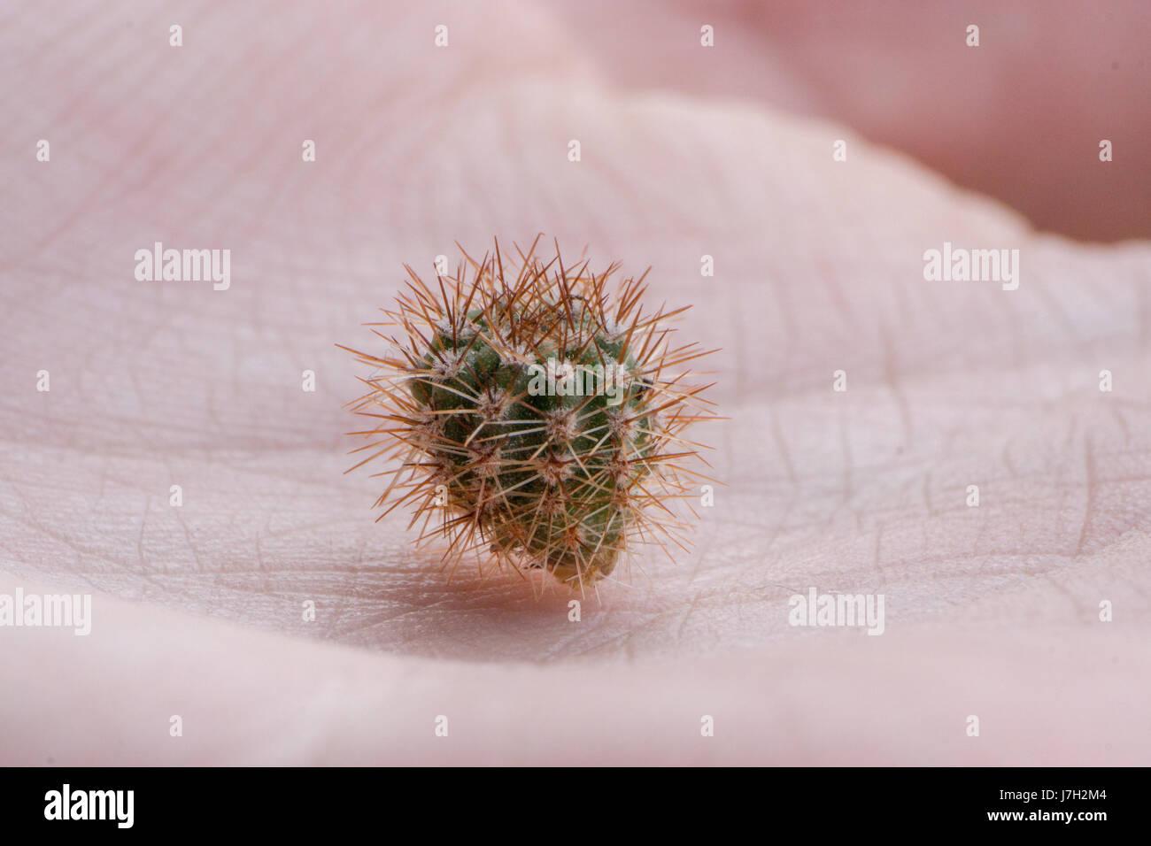 Tiny cactus Stock Photo