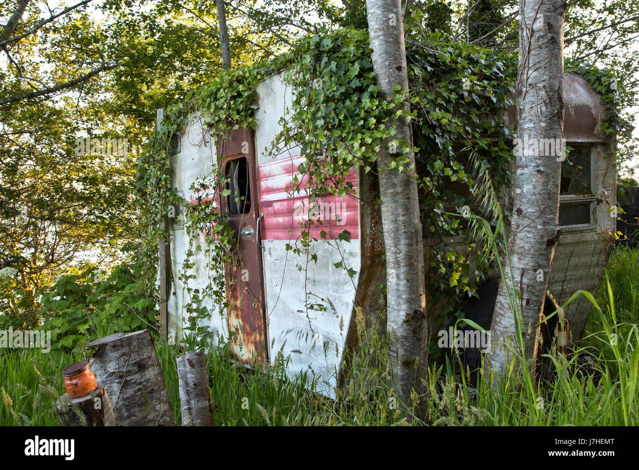 Vintage Travel Trailer Tour-A-Home, with encroaching Spanish Ivy,  resting under a grove of Alder trees. - Stock Image