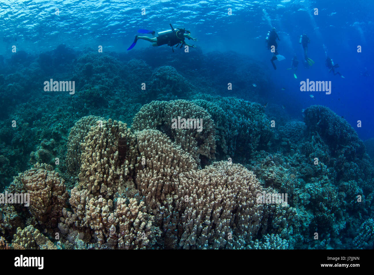 Scuba divers explore hard coral reef in the Red Sea off the coast of Egypt. Stock Photo