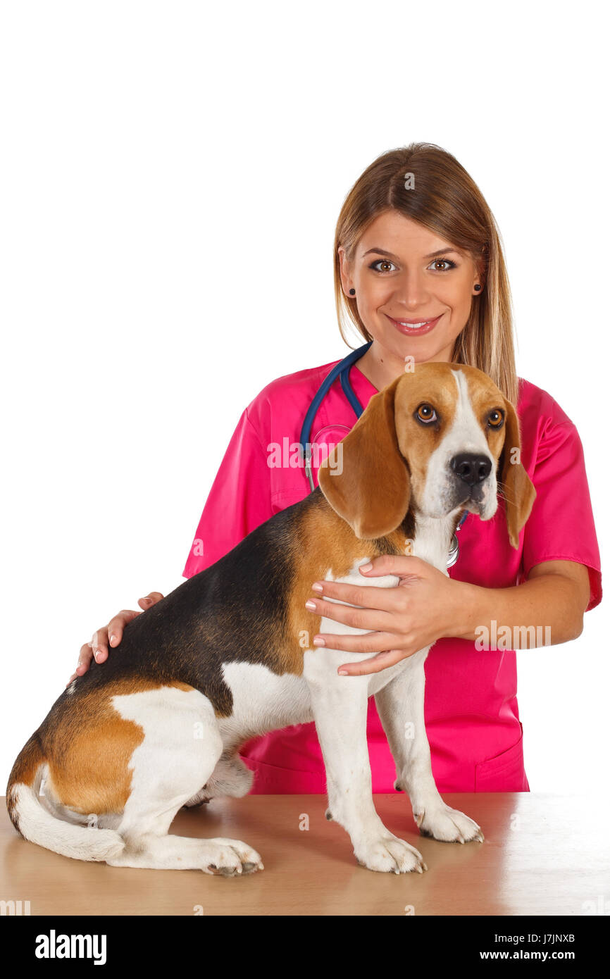 Picture of a dedicated young veterinarian with a little beagle Stock Photo