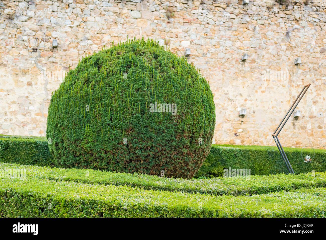 Round Bush In A Tuscan Garden, Italy