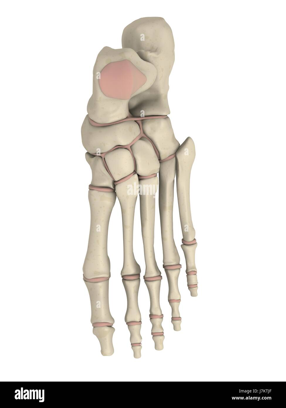human human being pain foot skeleton joint anatomy osteoporosis ...