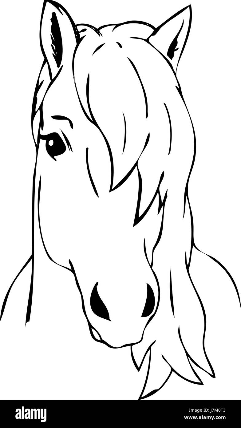 Colour Illustration Paint Draw Cartoon Art Isolated Horse Wild Face Stock Photo Alamy