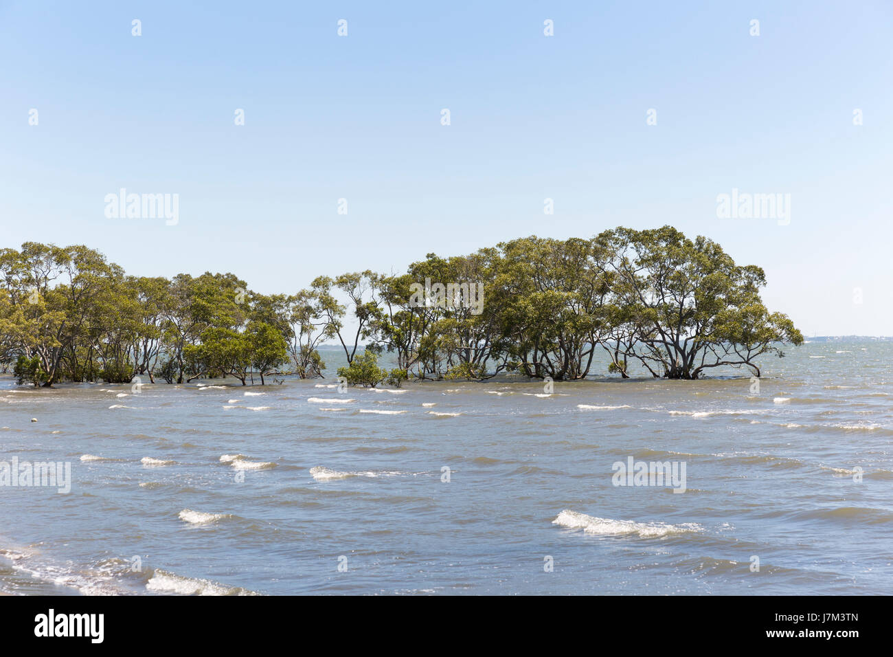 Trees are in the seashore. - Stock Image
