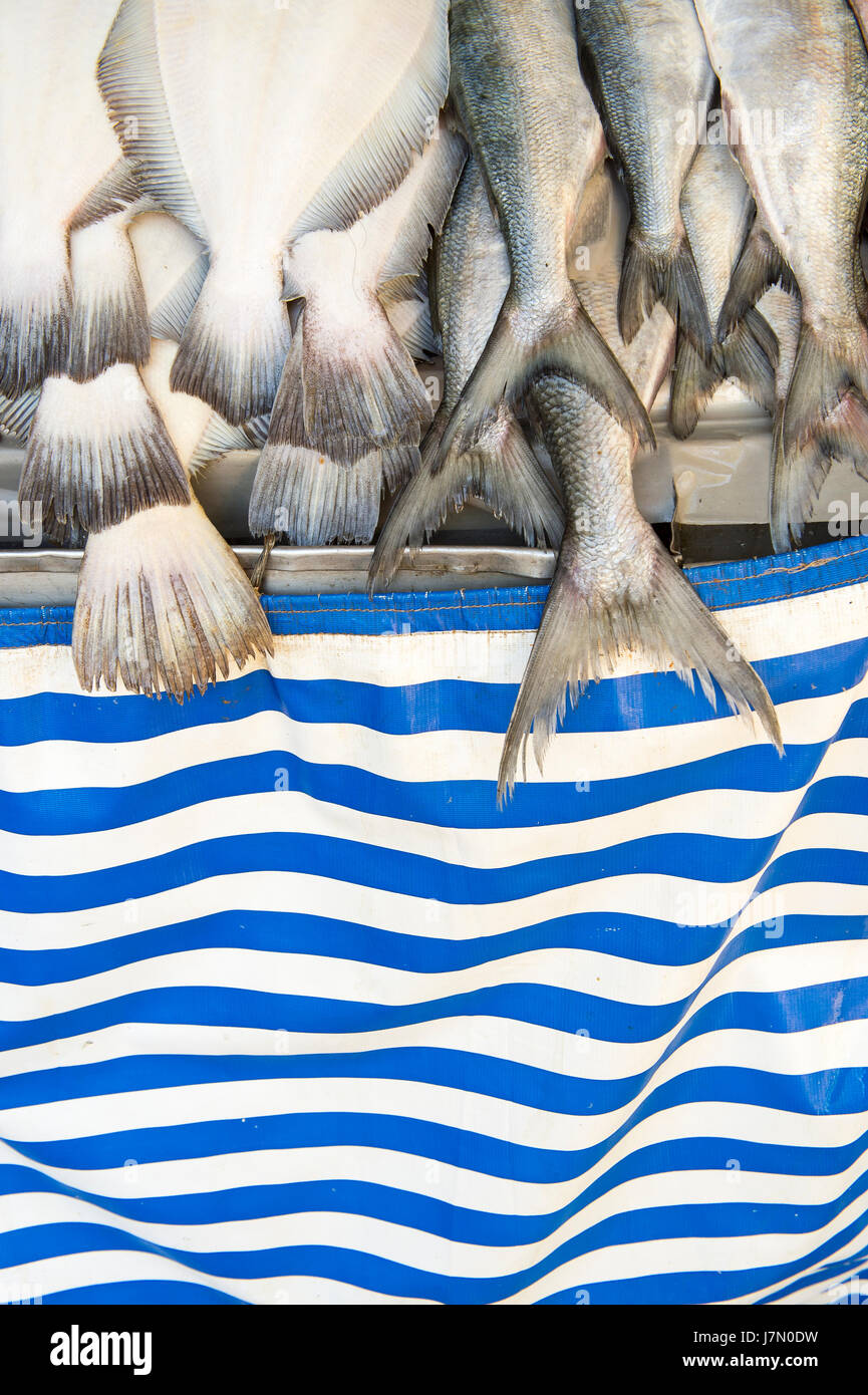 Fish tails hang above blue stripes in a symbol of worldwide overfishing - Stock Image