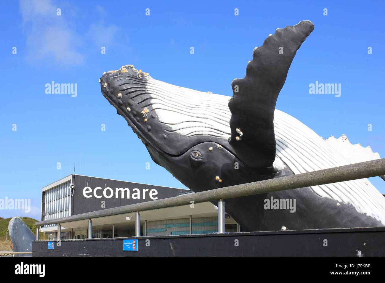Ecomare - Humpback Whale Sculpture - Stock Image