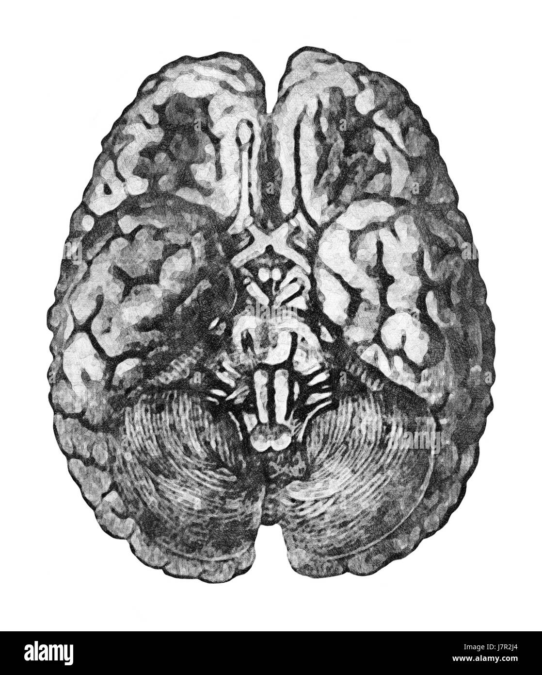 Brain Drawing Old Black and White Stock Photos & Images - Alamy