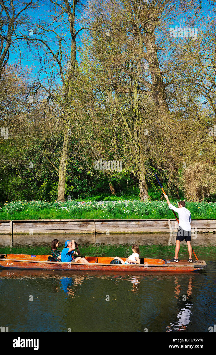 Tourists Punting on the river cam in Cambridge on a beautiful sunny day - Stock Image