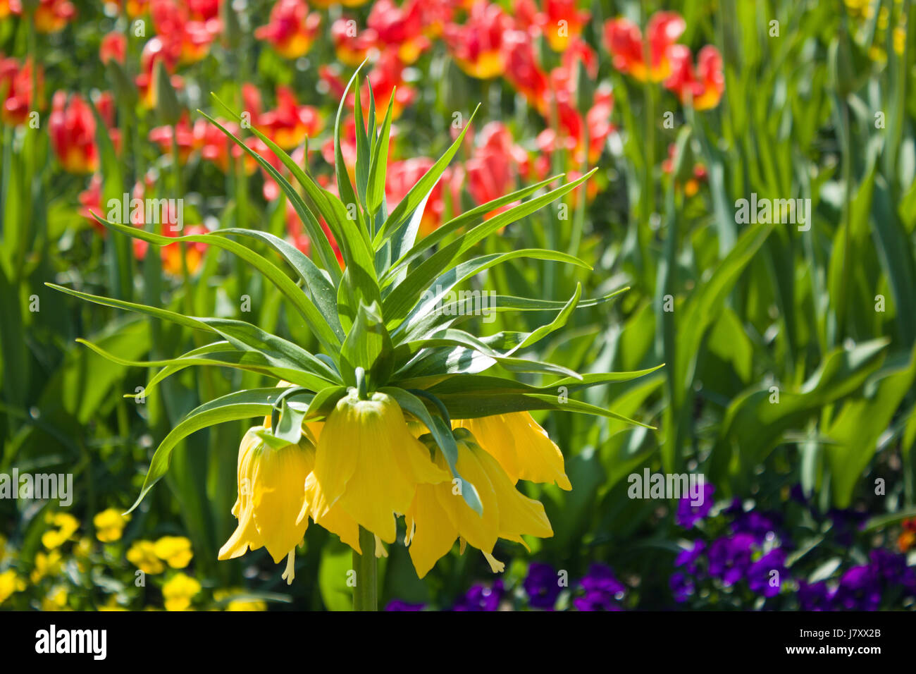 flower plant spring page sheet yellow glass chalice tumbler garden flower plant Stock Photo