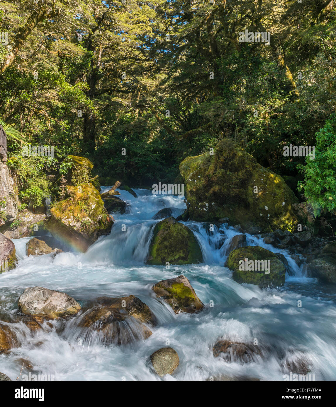 River flowing through lush vegetation, temperate rainforest, Fiordland National Park, Southland, New Zealand - Stock Image